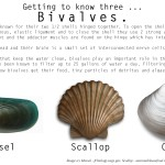 Getting to know three … Bivalve edition