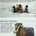 You otter know: It's Sea Otter Awareness Week!