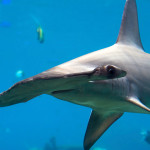 CITES recognizes important marine species
