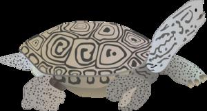 normal_ian-symbol-malaclemys-centrata_iandotumcesdotedu