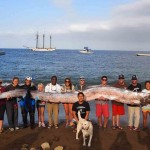 5 things you might not know about oarfish
