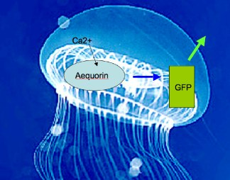 gfp2_conncolldotedu