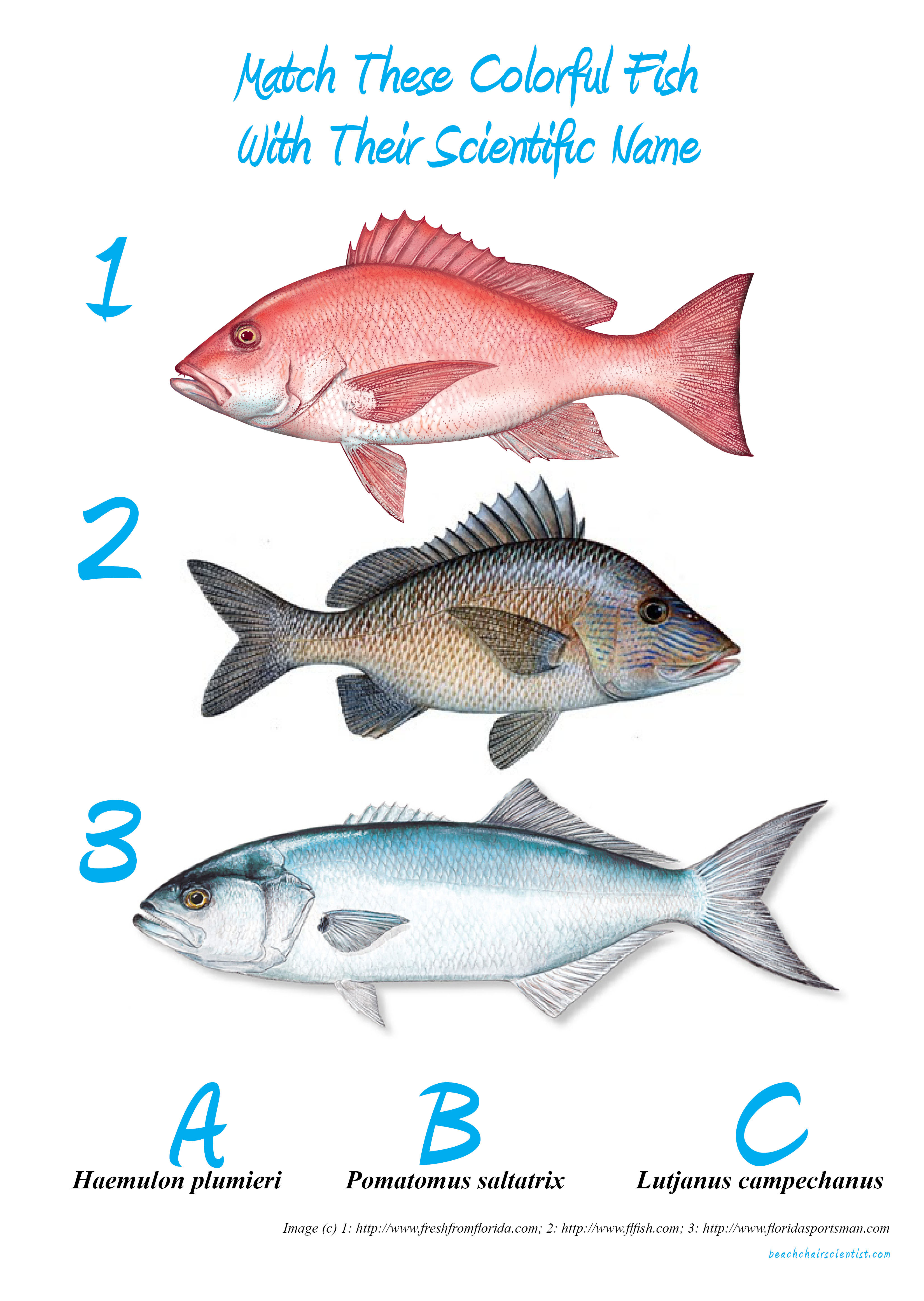 Pictures of fishes and their names for Types of fish