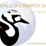 What you need to know about World Shorebirds Day: Saturday, September 6th