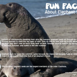 Marine Mammal Monday: Elephant seals