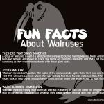 Marine Mammal Monday: Walruses