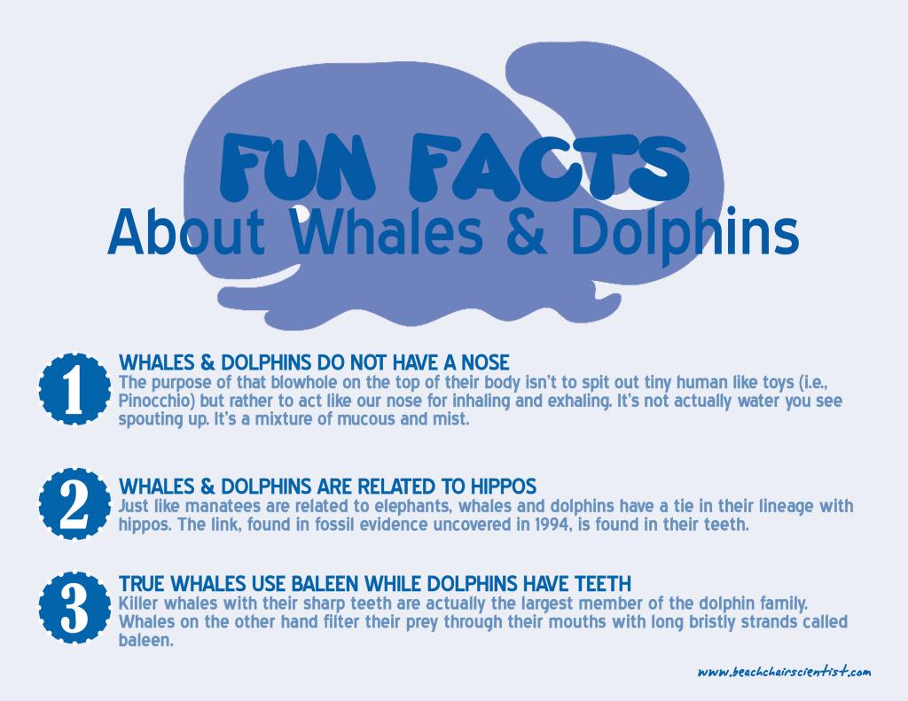 whales_beachchairscientist