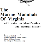 Marine Mammal Monday: The Marine Mammals of Virginia