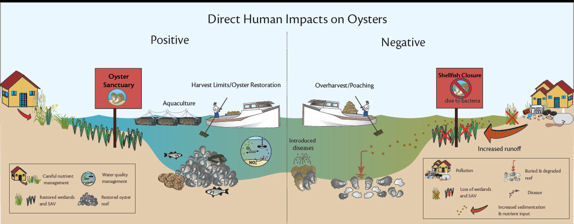 Oyster_human_impact_diagram_SM_noaa