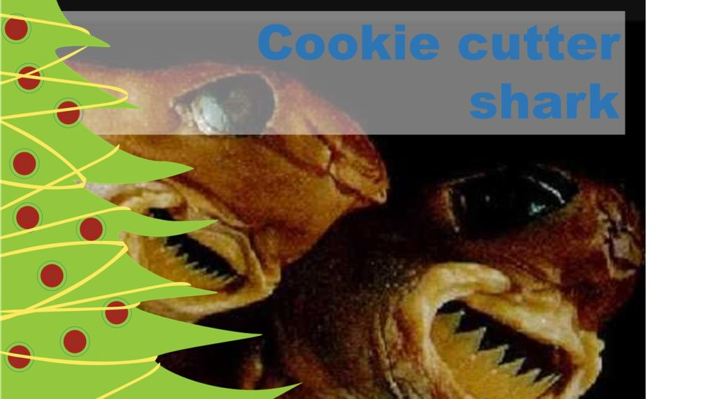 Christmas critter countdown: Cookie cutter sharks