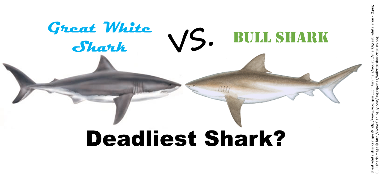 Deadliest shark: Great white vs. bull?